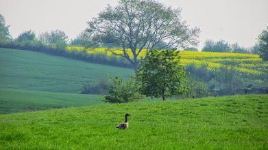 Photo: auf der Wiese hinter der Scheune