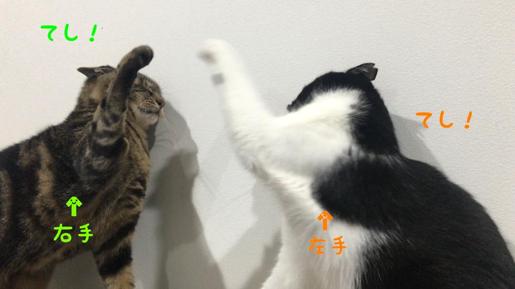 猫の手相?占い?猫の肉球の秘密!