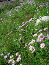 Photo: More wildflowers!