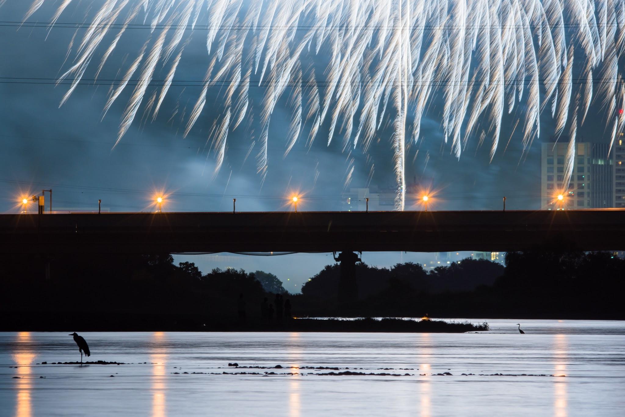 Photo: 花火見物 Fireworks enjoyed.  花火を見に河原へ訪れる 次々と打ち上げられる花火に 照らされる川面 先客たちの影が浮かぶ  (第37回世田谷区たまがわ花火大会)  #cooljapan #hanabi2015 #nikon #sigma #fireworks  Nikon D7200 SIGMA 150-600mm F5-6.3 DG OS HSM Contemporary (3枚追加:Added 3 photo)