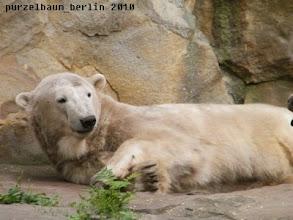 Photo: Hm, weiterschlafen ?