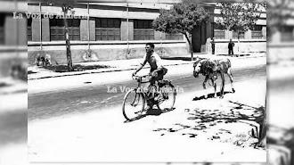 Un vecino atravesando la Carretera de Ronda a la altura de Briseis a bordo de su bicicleta. Llevaba enganchado en el portaequipajes un borrico.