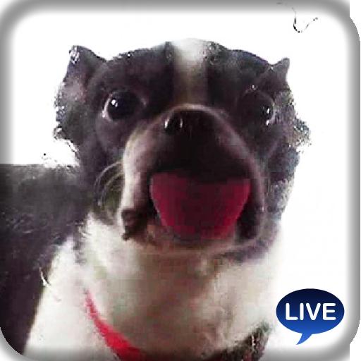 可爱小狗舔屏幕 - 超有趣应用 娛樂 App LOGO-APP試玩