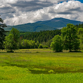 Our Dream Pasture by Sparty Rodgers - Landscapes Prairies, Meadows & Fields ( pacific northwest, landscape photography, nikon d800, boistfort valley, western washington state, pasture )
