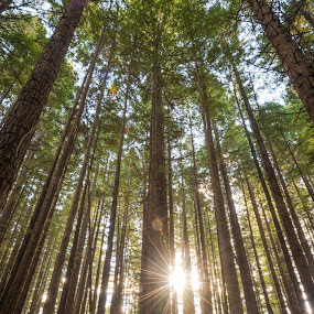 by Mark Anolak - Landscapes Forests