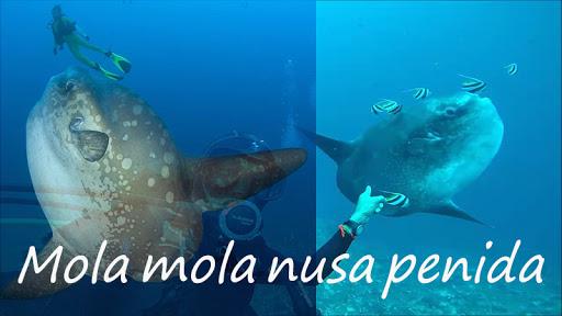 Snorkeling di Nusa Penida