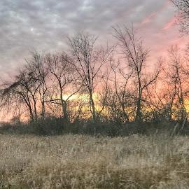 by Patti Pappas - Landscapes Prairies, Meadows & Fields