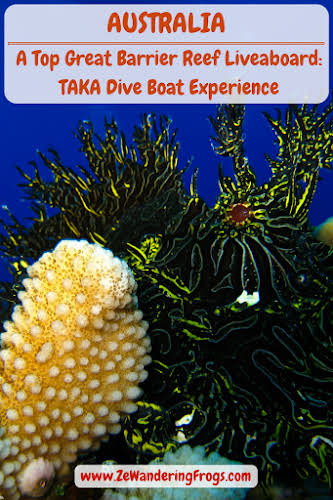 Australia Cairns Great Barrier Reef Liveobard Dive Boat Experience