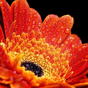 Flower 6585 Nov 1 2012And2more_tonemapped_edited-1.jpg