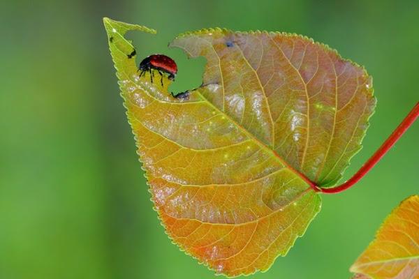 Natura!! di lorespo