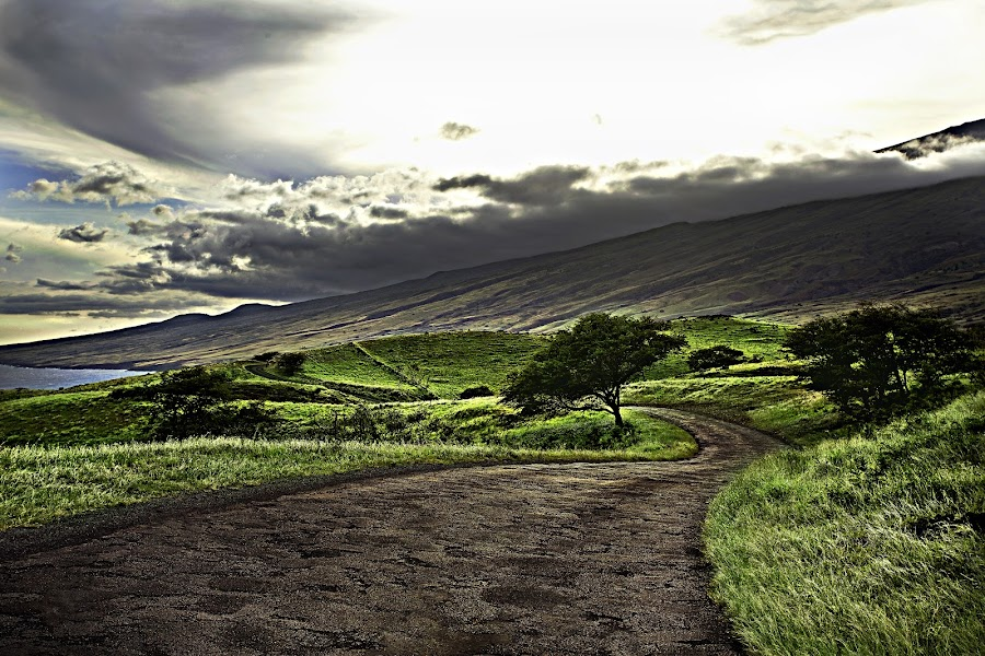 Sweet Winding Road by Christie Lynn - Landscapes Travel ( clouds, nature, trees, ocean, beauty )