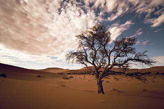 Photo: Sossusvlei Tree