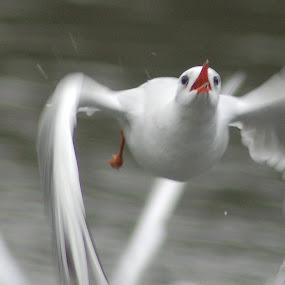 by David Degruchy-Jones - Animals Birds