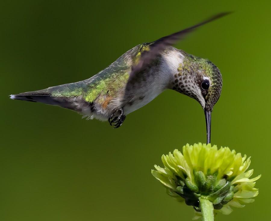 by Mike Craig - Animals Birds (  )