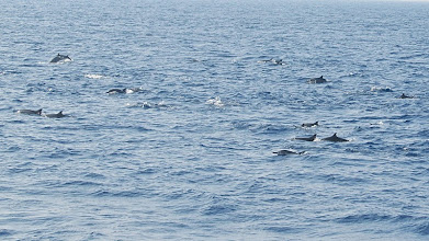 Photo: Dauphins - Mirissa - (c) wsylvie 2015