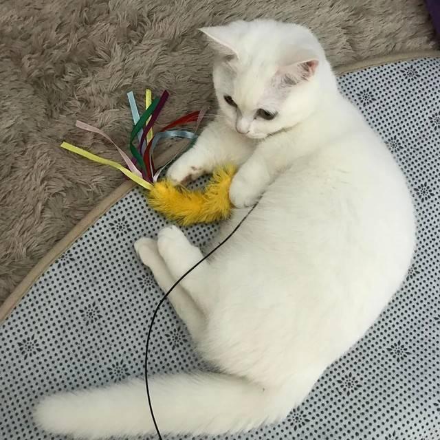 ผลการค้นหารูปภาพสำหรับ เล่นกับแมว