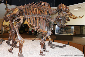 Photo: The American mastodon (Mammut americanum) is an extinct North American proboscidean that lived from about 3.7 million years ago until about 10,000 BC. It was the last surviving member of the mastodon family.