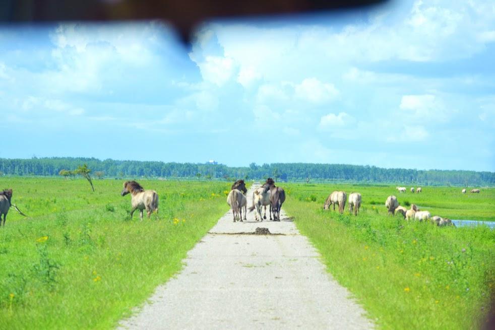 doen-in-flevoland