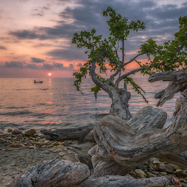 Sunset on tropical island. by Valeriy Ryasnyanskiy - Landscapes Sunsets & Sunrises ( pastel, seascape, journey, sunset, beach, tree, travel,  )