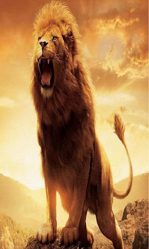 Lion Wallpapers Hd Apps On Google Play
