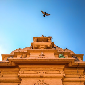 No one is free, even the birds are chained to the sky   by Mitul Gajera - Buildings & Architecture Public & Historical ( #sky #high #fly #beautiful #beauty #bird #heritage #architecture #light #shine )