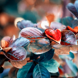 New colors for a new day... by Claudius Cazan - Nature Up Close Other plants ( heart, autumn, colorful, leaves, close-up )