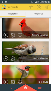 Bird Sounds Ringtones 1.12 Mod APK Download 1