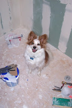 """Photo: Just because I can, I'll post a picture of Watson. :) He was a really well-behaved dog while I was applying my final coat of mud. In fact, he posed for the camera near my tools, so I couldn't resist snapping this picture. He's my little """"worker"""" Watson! LOL!"""