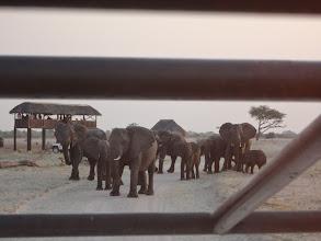 Photo: Elephants blocking the road