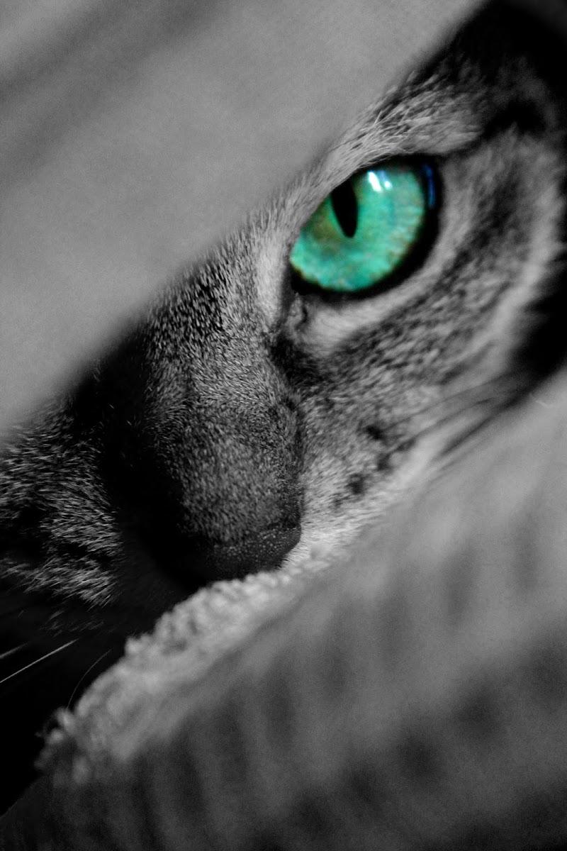 E mi perdo nei tuoi splendidi occhi verdi di Laura Molinaro