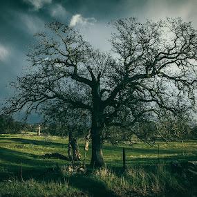Spooky Tree by Matthew Clausen - Landscapes Prairies, Meadows & Fields ( rain, stormy, tree storm, nature, moody, tree, dark, clouds )
