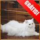 Quebra-cabeça Reino dos Gatos (game)