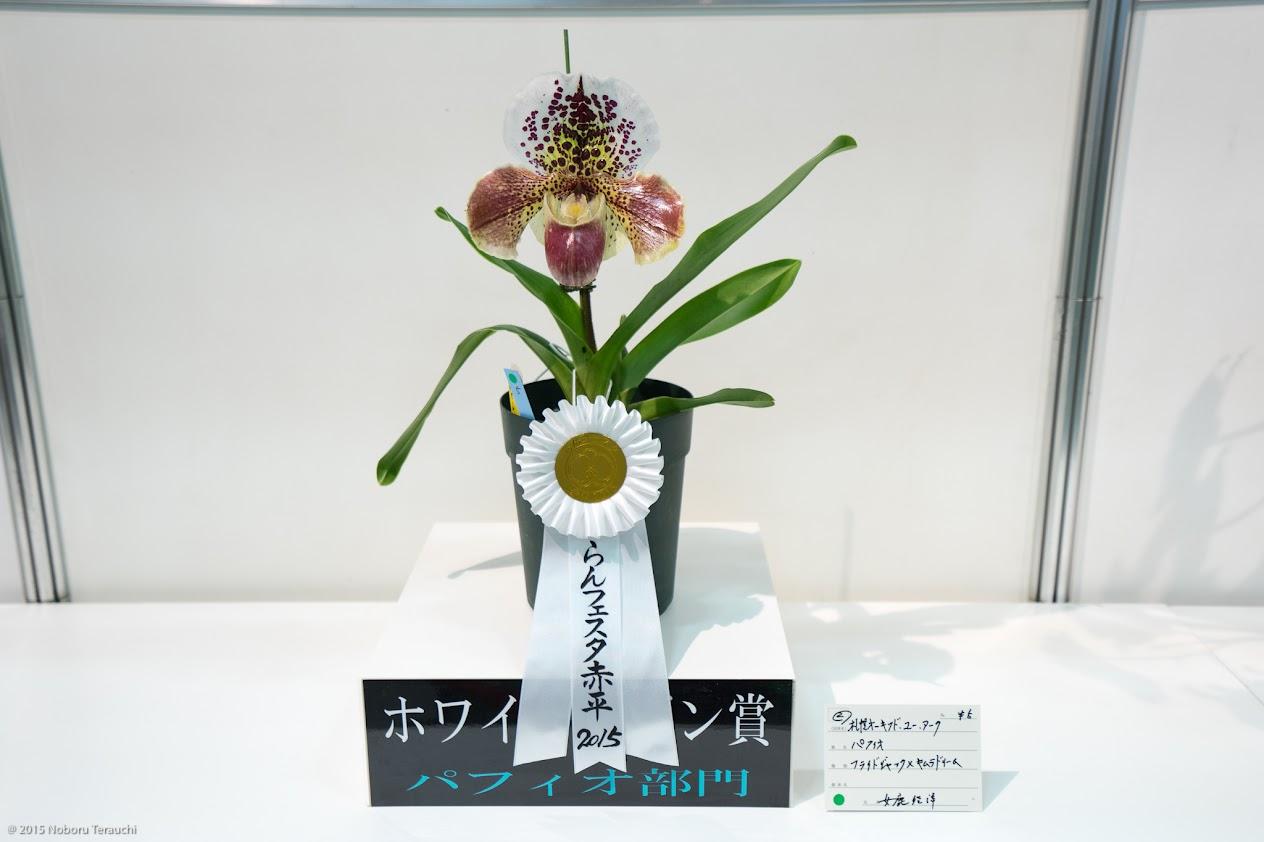 ホワイトリボン賞