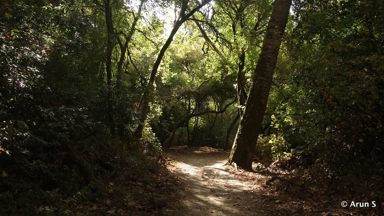 Henry Cowell State Park (2 River Crossing Hike) - Memory Lane on