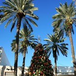 christmas tree on Lincoln Road in Miami, Florida, United States