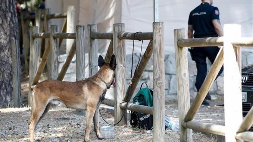 Un perro de rastreo y un agente de la Guardia Civil en Cercedilla.