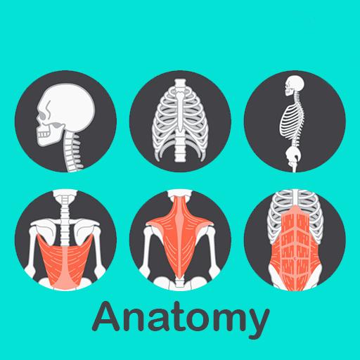 A to Z Anatomy 3D