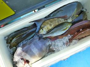 Photo: イノウエさんの釣果です! 種類は入りましたが・・・真鯛の枚数が。