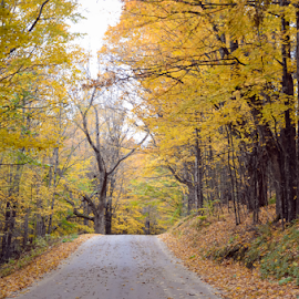 Country road in Newark, Vermont by Sarah Sanville - Landscapes Forests ( foliage, fall, leaves, vermont, country road )