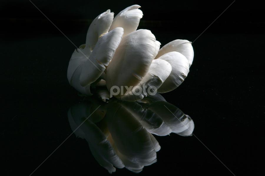 White Zetas by Cristobal Garciaferro Rubio - Nature Up Close Mushrooms & Fungi ( mushroom, reflection, fungi, zetas, white zetasa )