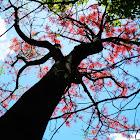 Fame Tree