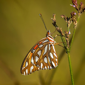 Morning Dew by Roy Walter - Animals Insects & Spiders ( butterfly, nature, wildlife, friterlary, insect )