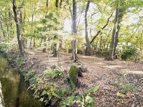 Photo: 伐採予定地