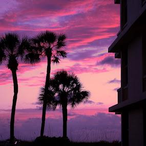 Pink sunset by Olivier Grau - Landscapes Sunsets & Sunrises ( clouds, sky, sunset, pink, palmtree,  )
