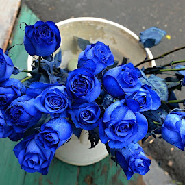 Have a nice day. by Marcel Cintalan - Flowers Flower Buds ( blue, tegucigalpa, roses, beauty, flowers, honduras,  )