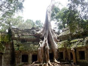 Photo: Ta Phrom Temple, Cambodia