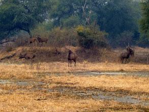 Photo: Sambar deer and stags in Bharatpur Bird Sanctuary 2008