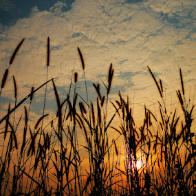 by Edi Wibowo - Landscapes Prairies, Meadows & Fields