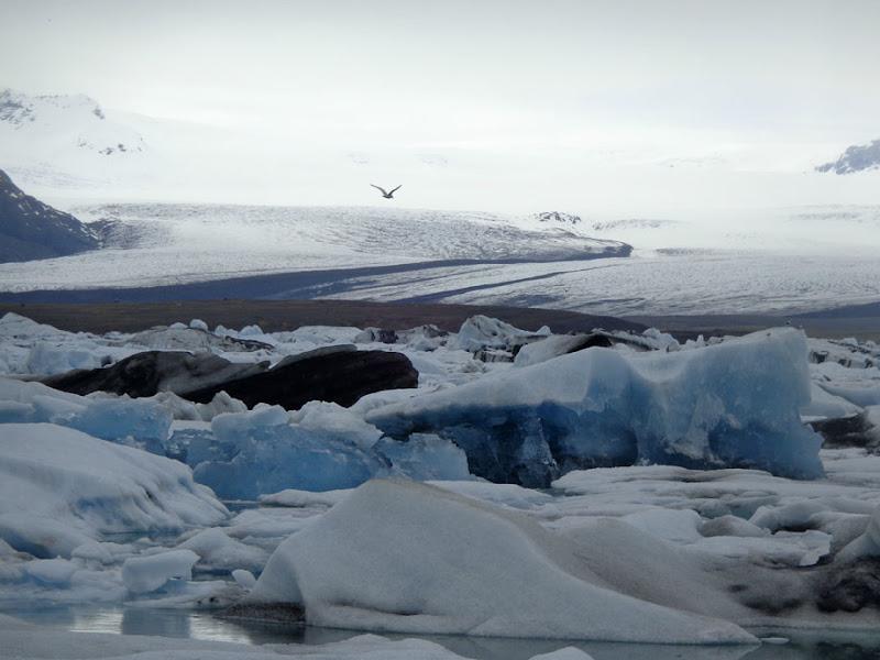 Laguna Glaciale, Islanda di Aivlis