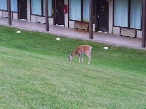 Photo: Breakfast, deer style.